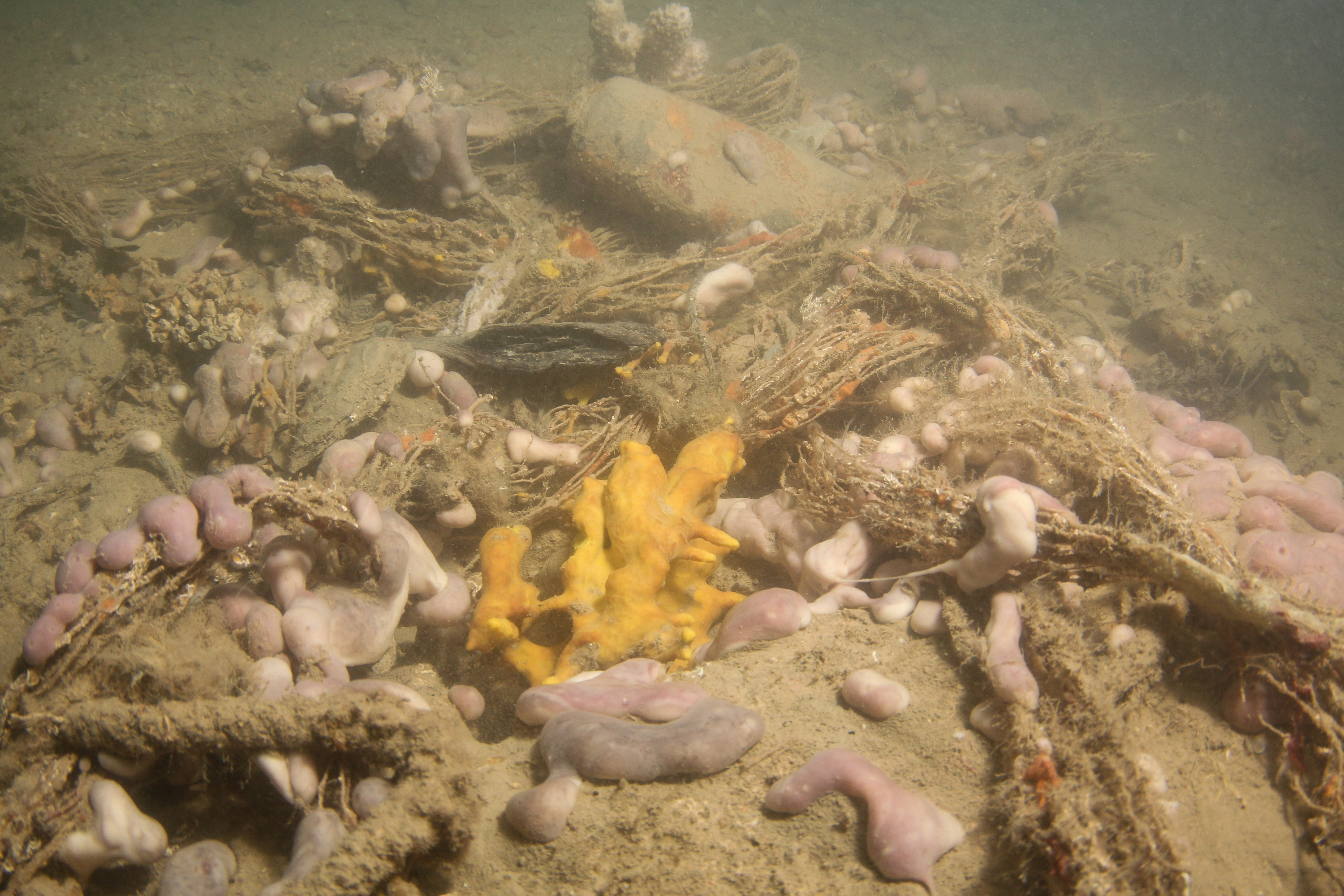 Underwater footage from Mali Ston Bay, copyright of Dubrovnik Neretva County Public Institution for Natural Protection
